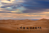 Berber guide leading a group of tourists on camels into the Erg Chebbi desert for a night ride
