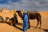 Berber men tending Dromedary camels after a morning ride in Erg Chebbi desert at Auberge du Sud