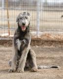 Puppy Day Feb 04 2006