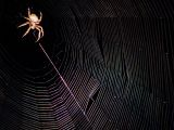 August 15, 2006Spinning a Web