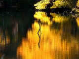 Flood of Yellow ~ October 10th