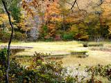 October's Palette ~ October 26th
