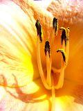 lily stamen.jpg