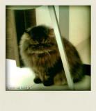 Polaroid - Cat