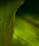 Green+leaf