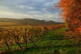 Soultz les Bains, vineyard