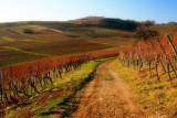la vigne en hiver.