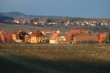 Itterswiller vineyard,  Alsace.