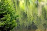 lac des truites, reflets