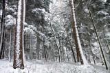 la forêt d'Aubure