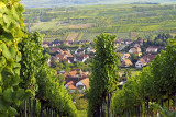 vines everywhere