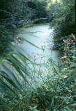 1988 forêt du Ried