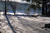 les Vosges en hiver.