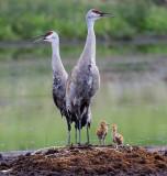 Cranes -2