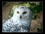 The owls are not what they seem!
