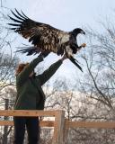 Eagle Days 2006 - Sauk City, WI