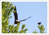 Mequon Bald Eagles