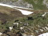 IMG_0092 Moutons noirs et blancs_1_1.JPG