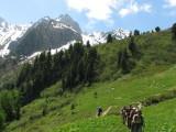 IMG_1053 Sentier l'Alpe Bovine (1985m)_1.JPG