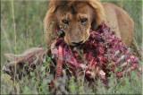 Tanzania_2010  Wildlife at the Serengeti