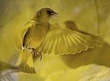 BIRDS MUSEUM