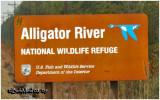 Alligator River NWR.-NC