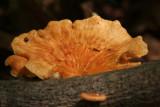 Fungi 20