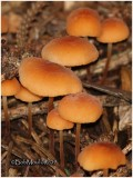 Fungi51