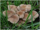 Fungi55