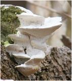 Fungi16