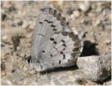 Spring Azure - form Marginata