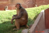 agra33-agra fort