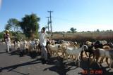 rajastan countryside15