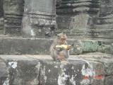 cambodia angkor temples and siem reap056.JPG