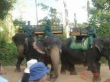 cambodia angkor temples and siem reap061.JPG