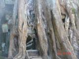 cambodia angkor temples021.JPG