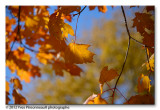 Thru the leaves ...