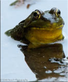 Upclose and personal with a Froggy ...