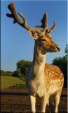 Deer at sunset ...