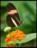 Natural Environmental Photography