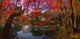 :: 京都植物園 ::