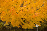 Fall Color at Sibley State Park  ~  October 11