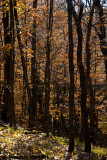 The Fall Woods  ~  October 25