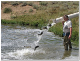 Fish Stocking in WY