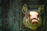 PIG FACE.jpg