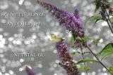 Schmetterlinge an der Linth in Netstal GL
