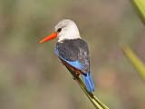 Birdtrip to Cape Verde 2009