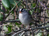 Birdtrip to Great Britain 2008