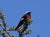 Birdtrip to Georgia 2008