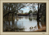 View showing part of the  old port of Echuca on the Murray River